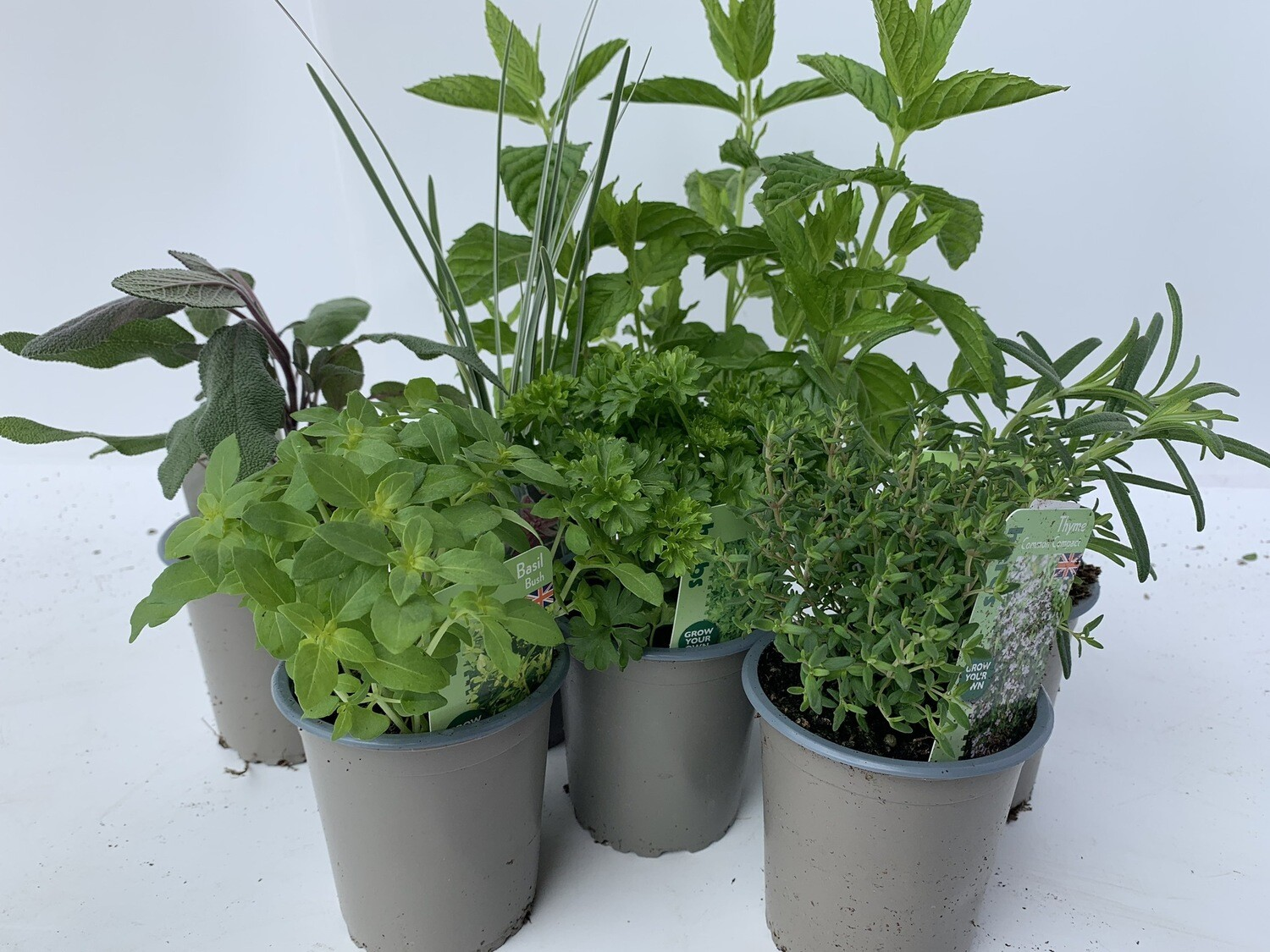 Herb Selection - Small (3 Plants)