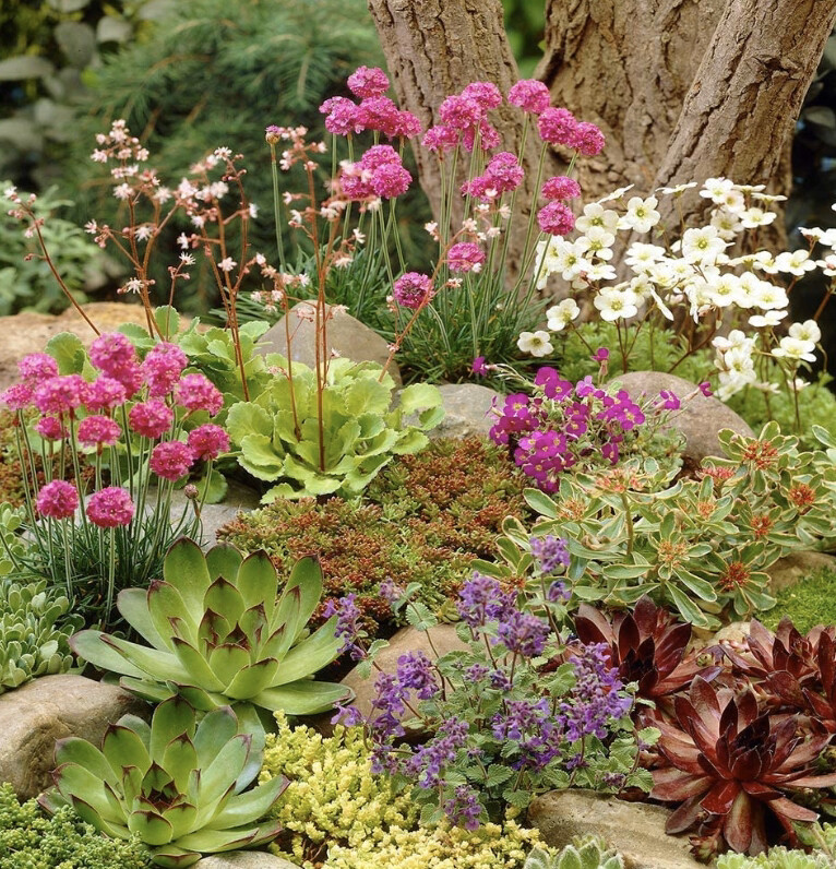 Alpine Selection (6 Plants)