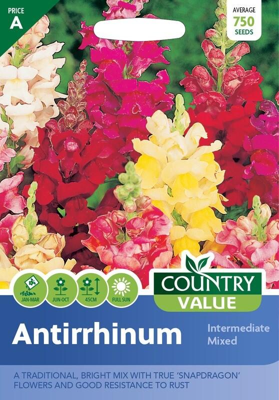ANTIRRHINUM Intermediate Mixed