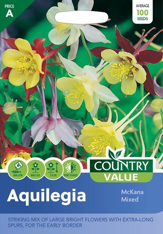 AQUILEGIA McKana Mixed