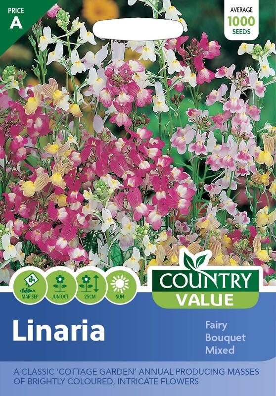 LINARIA Fairy Bouquet Mixed