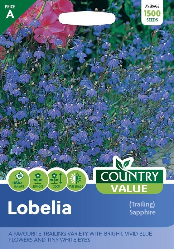 LOBELIA (Trailing) Sapphire