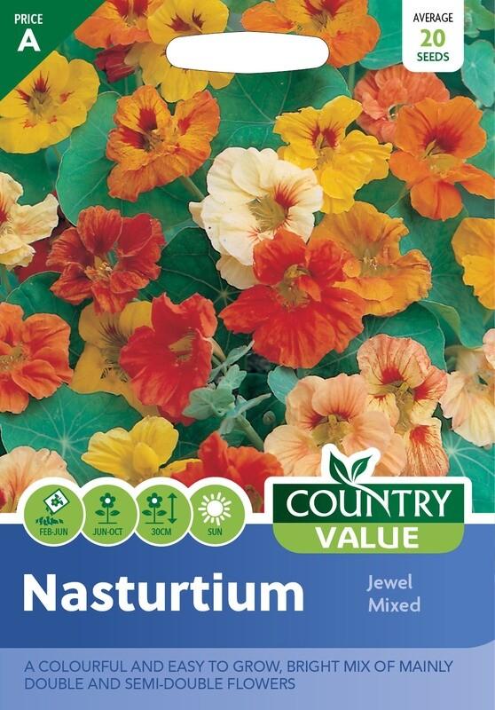 NASTURTIUM Jewel Mixed