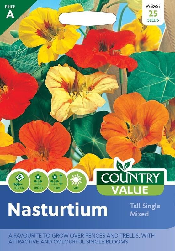 NASTURTIUM Tall Single Mixed