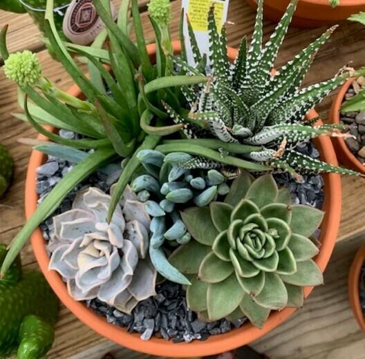 Mixed Succulent Garden Workshop*April 11th*4pm