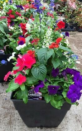 Patriotic Porch Planter*June 20th*4pm