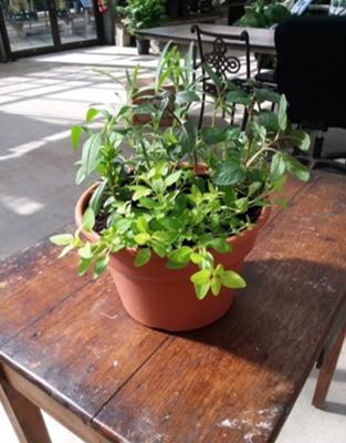 Herb Garden Workshop*July 25th*4pm