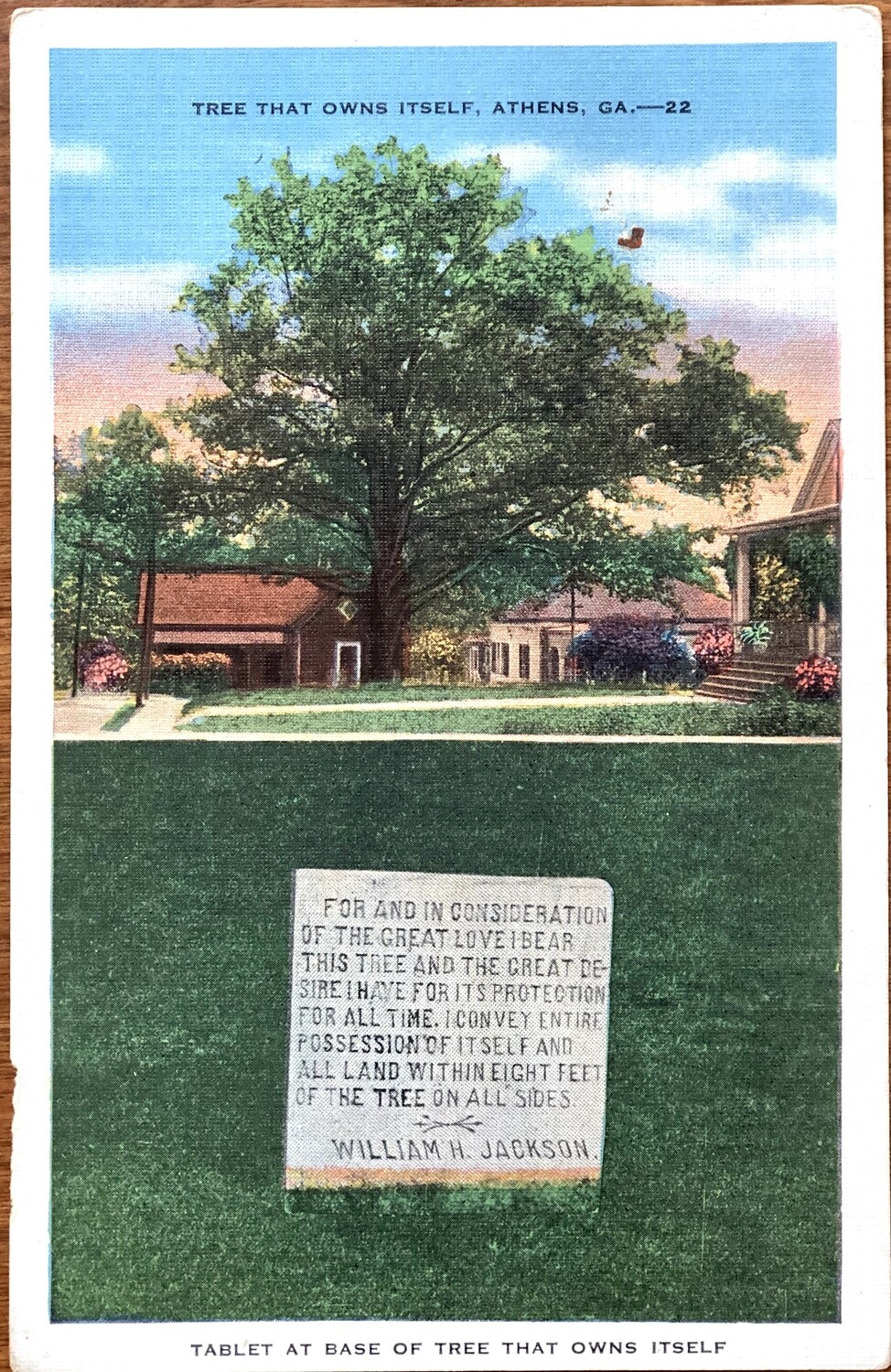 Tree That Owns Itself Athens GA Vintage Postcard
