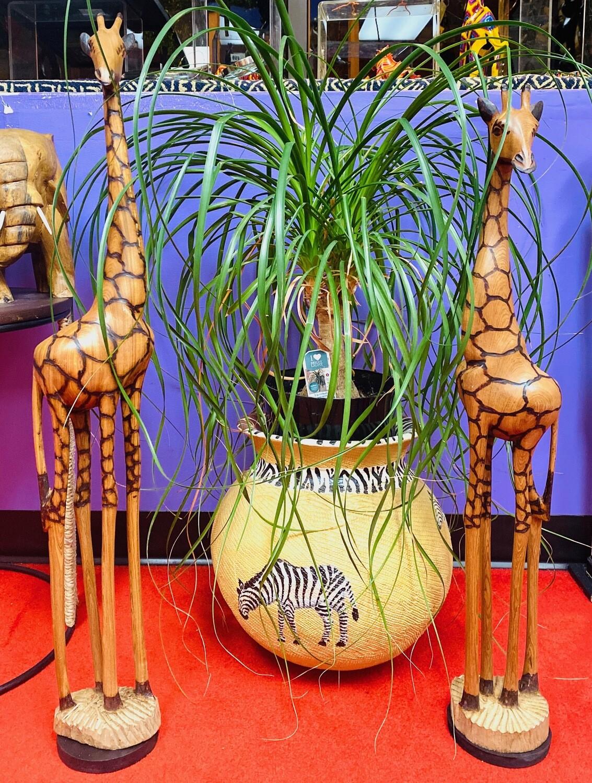 "Olive Wood Giraffes (31"")"