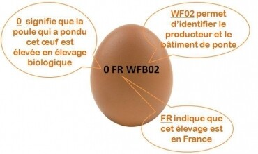 Œufs bio  la boite de 6 œufs