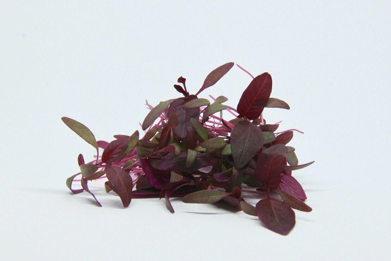 Red Amaranth