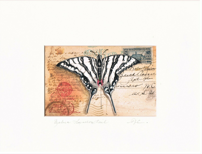 Vintage Postcard - Zebra Swallowtail Butterfly