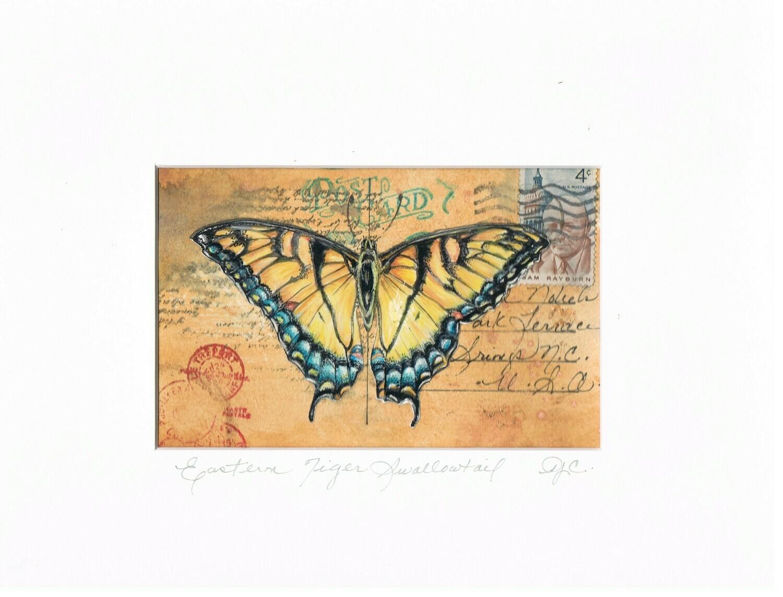 Eastern Tiger Swallowtail Butterfly Vintage Postcard