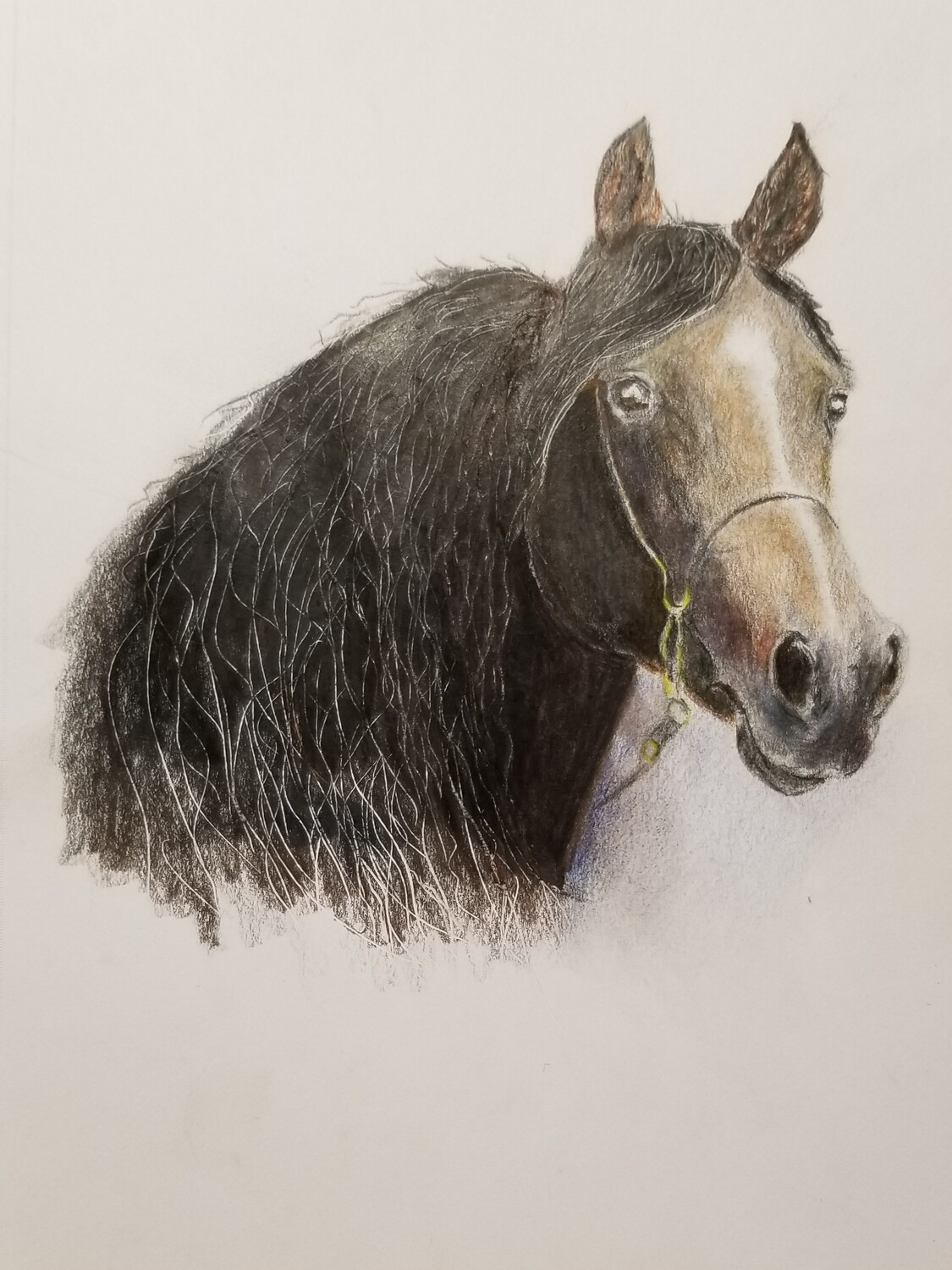 Black Beauty Double Matted Giclee Quality Print Of Polychromos Color Pencil Drawing Of Horse In Plastic