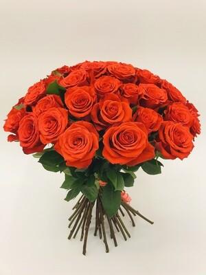 Роза Алая Эквадор 50 см 25 шт