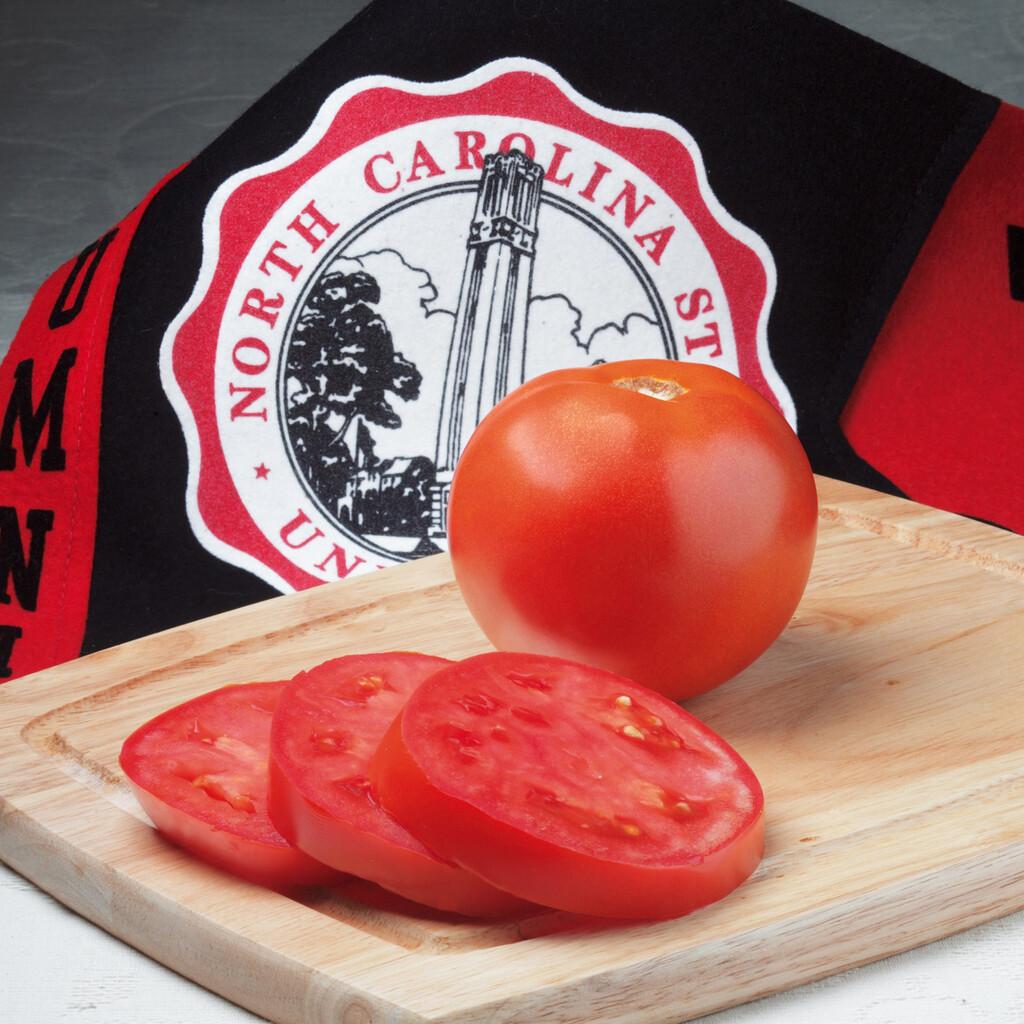 Mountain Glory - Tomato