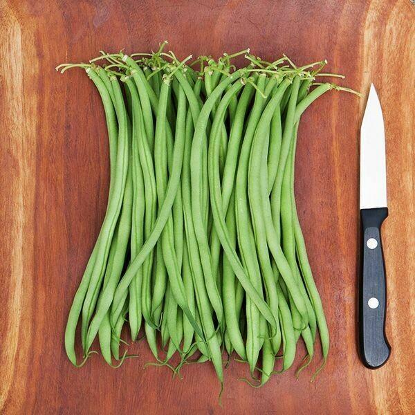 Maxibel French Filet Bush Bean - Organic