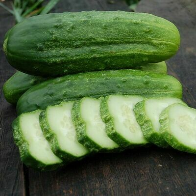 National Pickling Cucumber - Organic