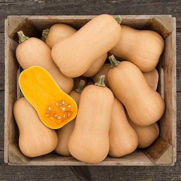Brulée Butternut Squash - Organic