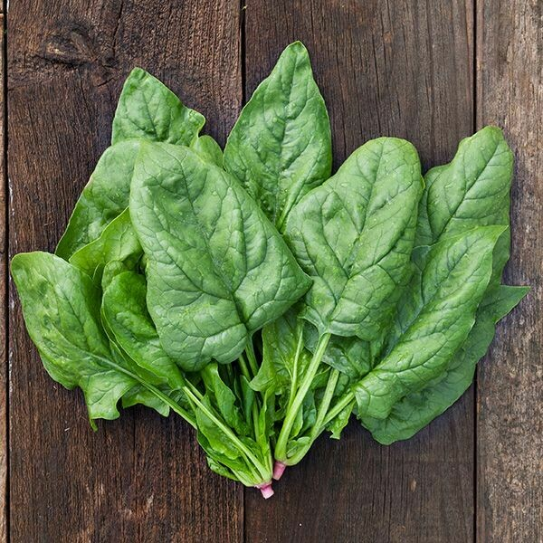 Giant Winter Spinach - Organic