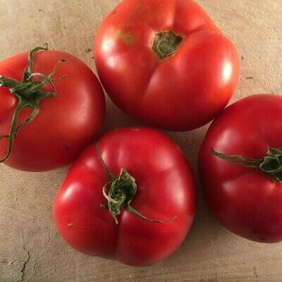 Montreal Tasty Tomato - Organic