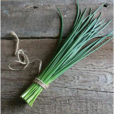 Staro Chives - Organic