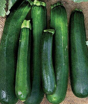 Black Beauty Zucchini - Heirloom