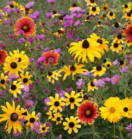 Wildflowers - East Coast Blend