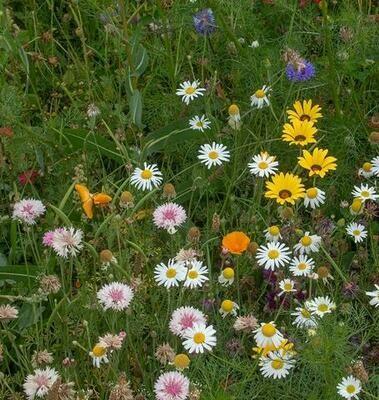 Wildflowers - Biodiversity Blend