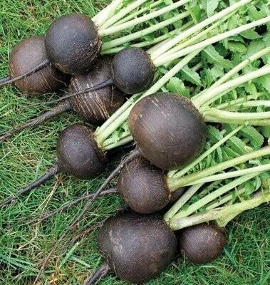 Black Spanish Round - Organic