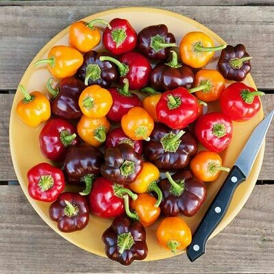 Bangles Blend Pepper - Organic