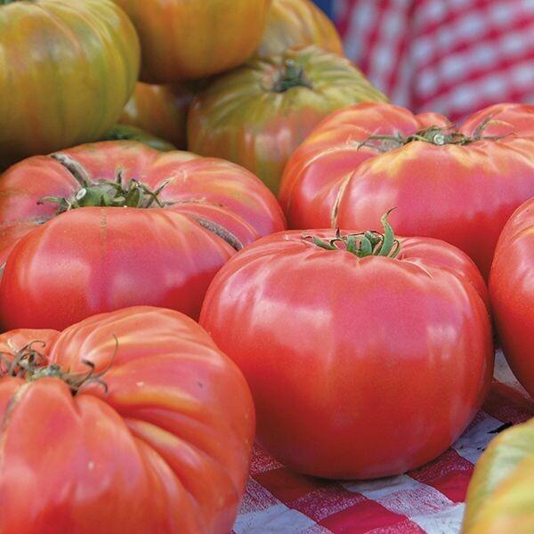 Brandywine Tomato - Organic
