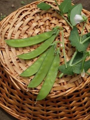 Norli Snow Pea - Organic