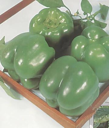 Cal Wonder Yarden Sweet Pepper - Organic