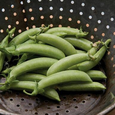 Sugar Snap Pea - Organic