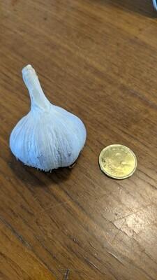 Russian Red Garlic Small