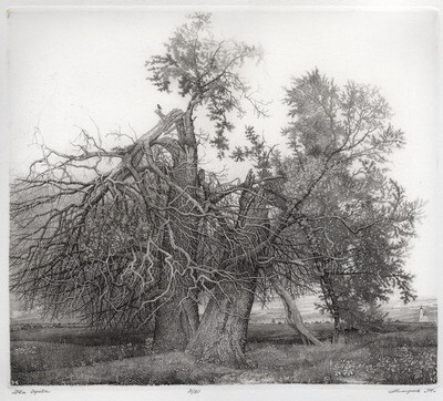 Два дерева/Two Trees/Deux arbres