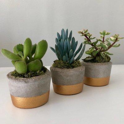 Succulent Pots  - Home