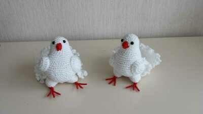 Tauben weiß