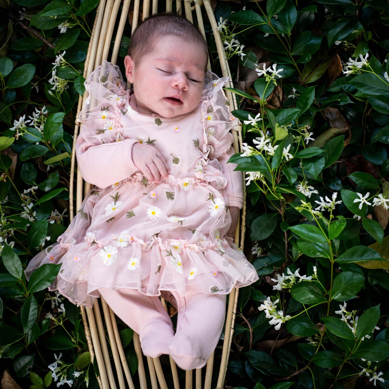 Newborn photo session, Stanthorpe only