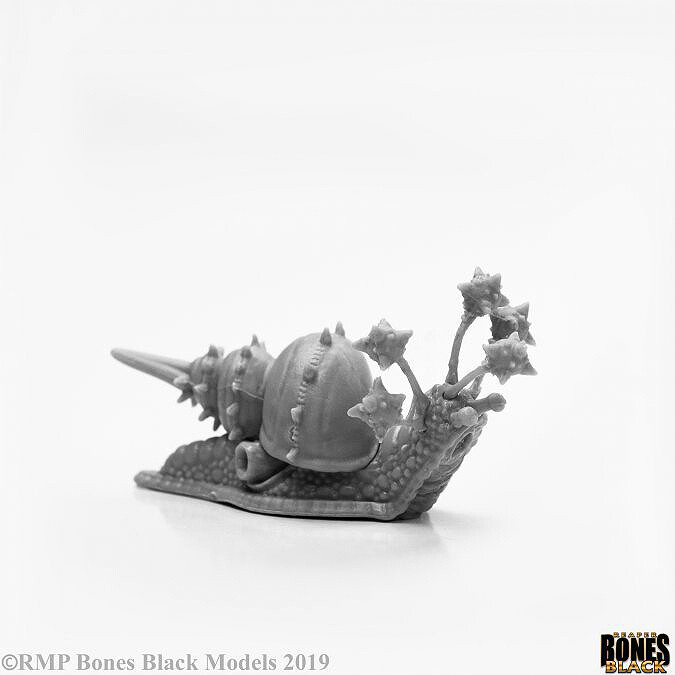 Thrasher Snail