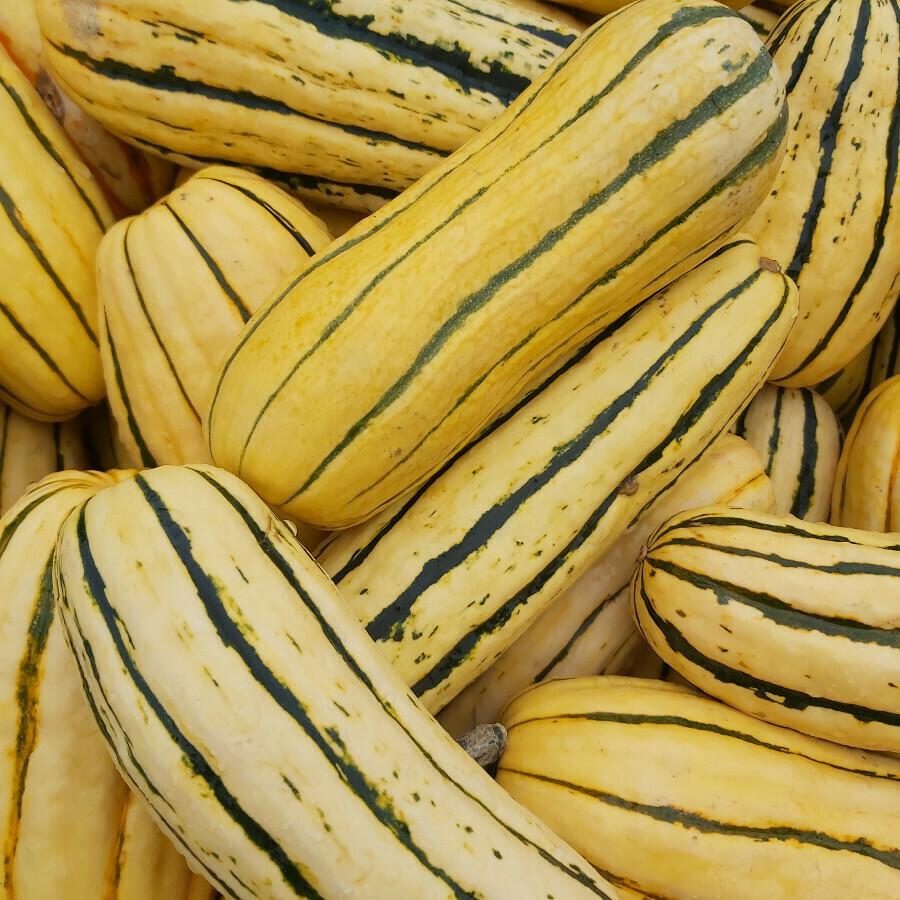 Delicata Squash - aka Sweet Potato Squash
