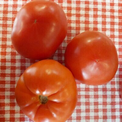 Tomatoes - Individual large, round field