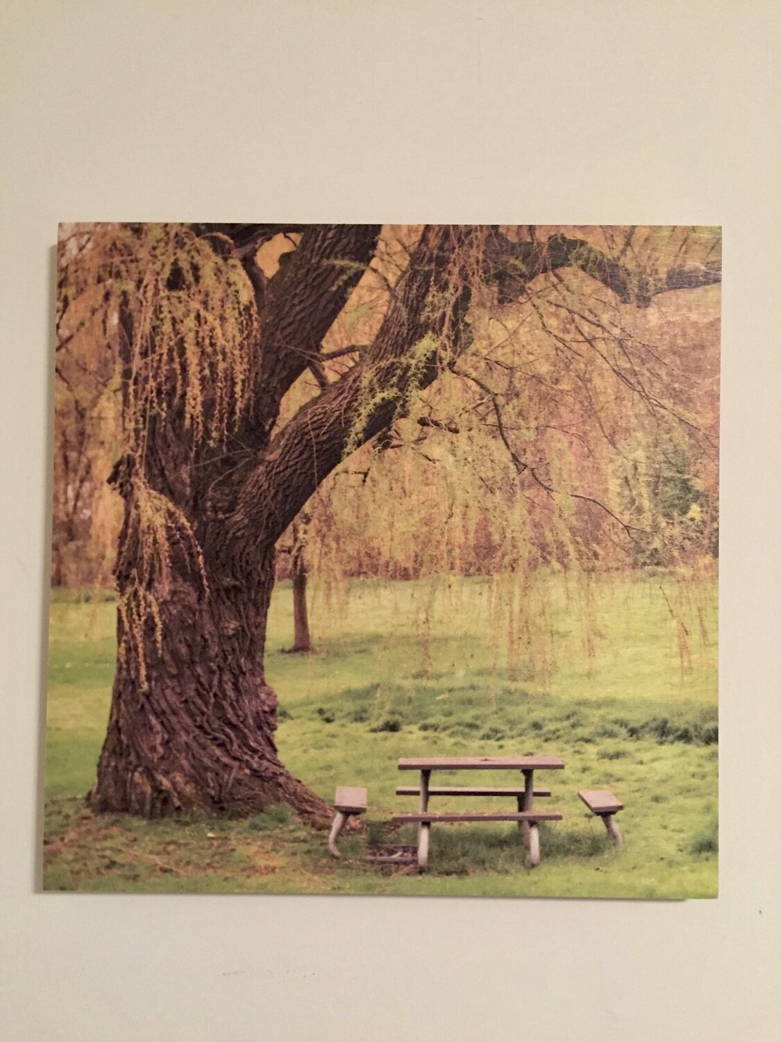Picnic Under the Weeping Willow