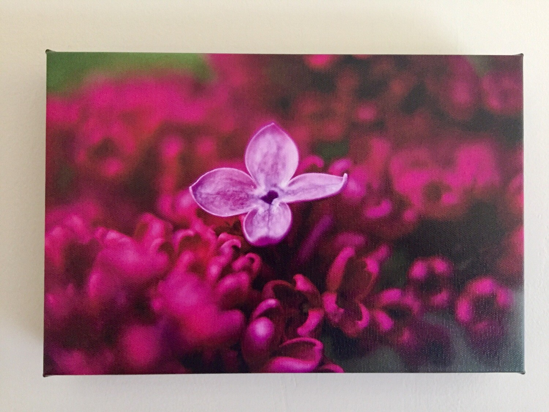 Earliest Lilac Bloom