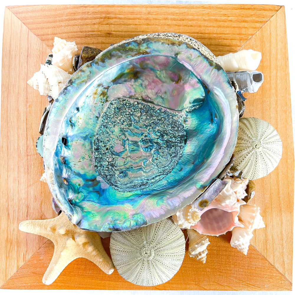 Handmade Abalone Shell on Wood Crate