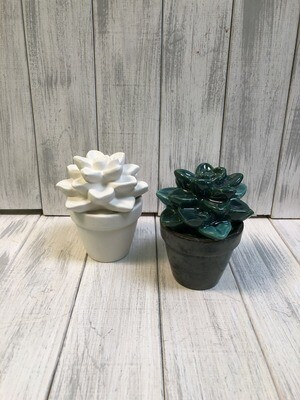 Succulent / Sweet Potted