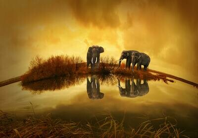Sunrise Elephants