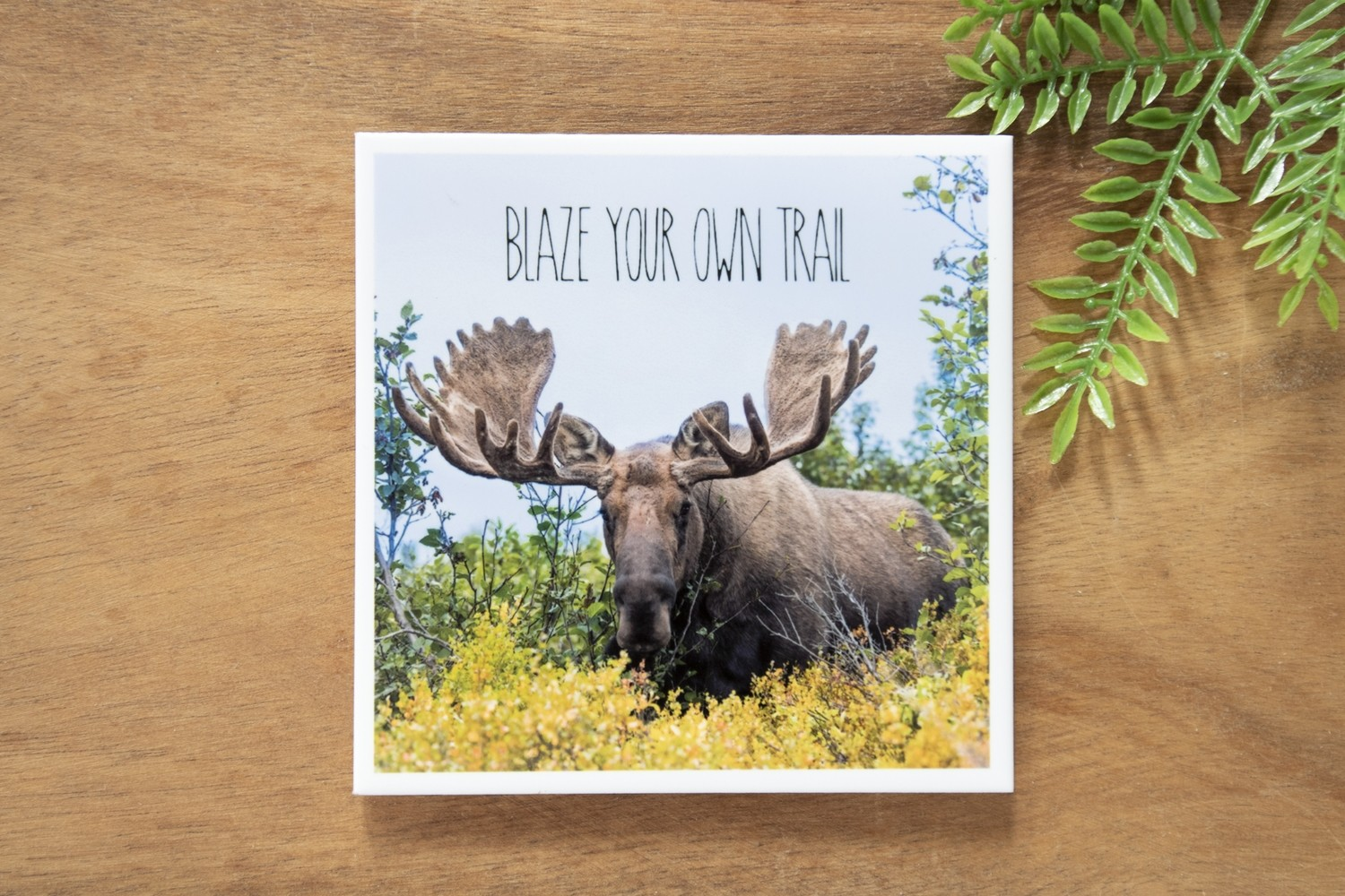 Blaze Your Own Trail-Nature Photo Coaster