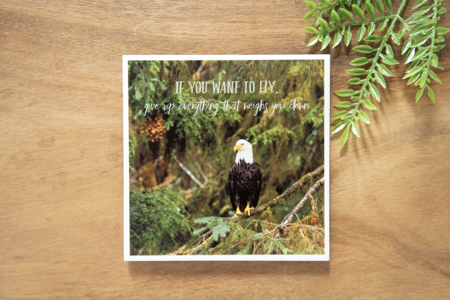 If You Want To Fly-Nature Photo Coaster